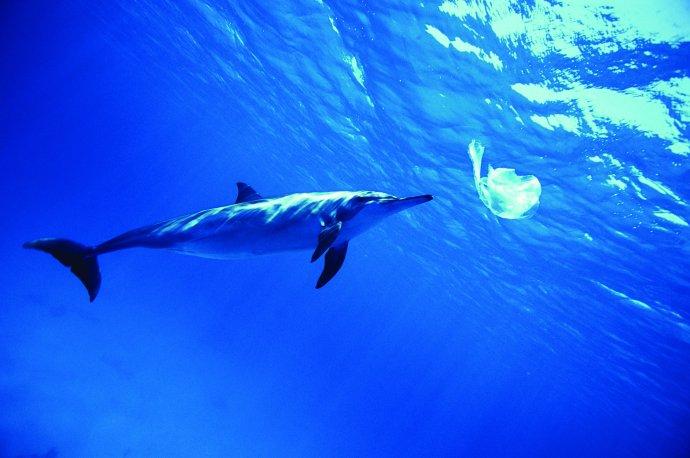 塑料垃圾泛滥海洋 动物将误食